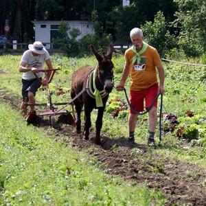 traiteur-vegetarien-amiens-hortillonnages-maraichage-bio